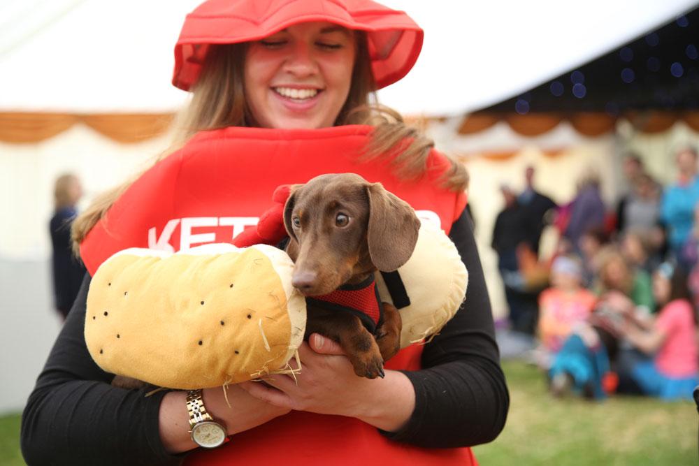 dog show dorchester festival