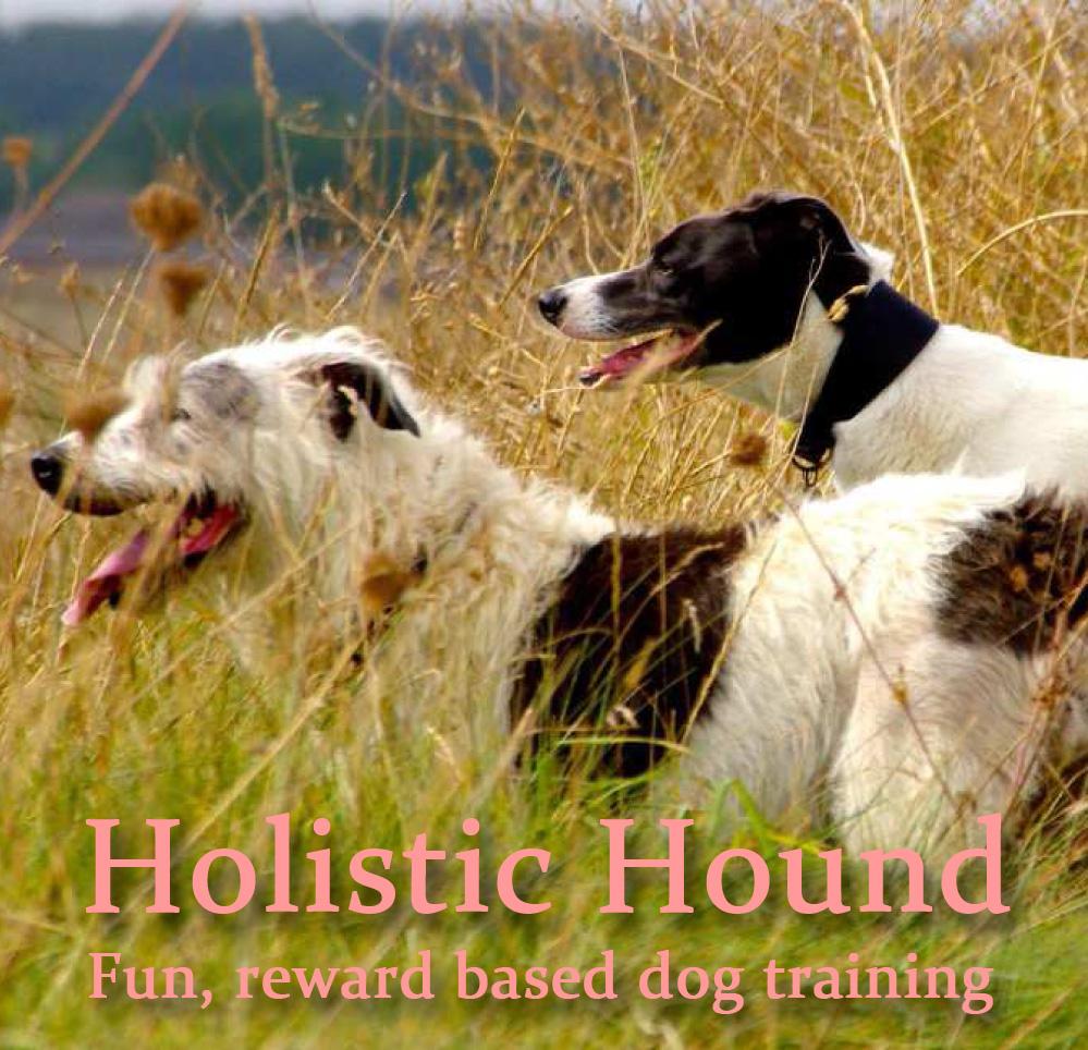 holistic-hound